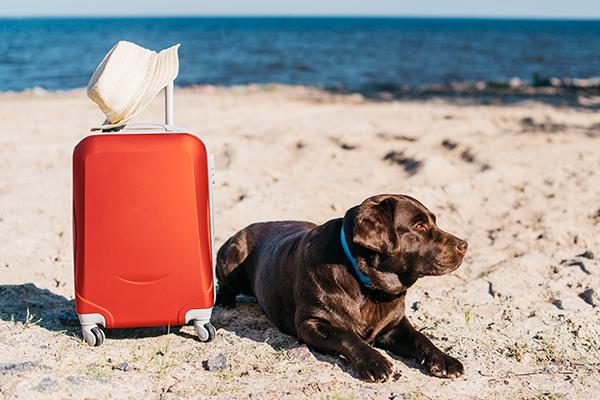 Viaggiare con animali | La Noria Case Vacanza | San Vito Lo Capo